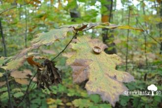 024_filip_i_owoce_jesieni